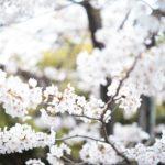画伯の雑記 – 2018年4月24日 Leica M10を買って4ヶ月が経ちました。